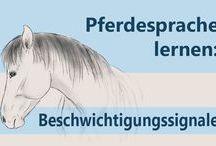 Pferdesprache verstehen