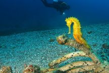 Scuba Diving all over the world