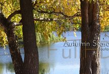 Autumn Season / Autumn Season Photography and Video collection.