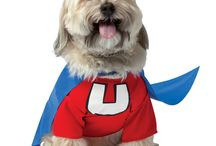 Pet Costume Ideas / Let your pet join in on all of the #Halloween fun! #Pet #Costumes