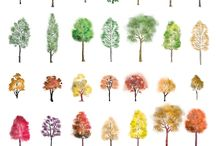 Selection of colour trees in photoshop for your architectural visuals.! from First In Architecture