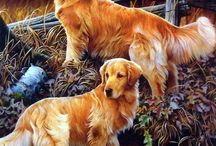 Golden retrieverek