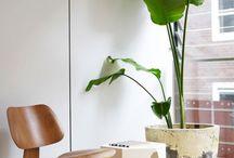 観葉植物 house plants