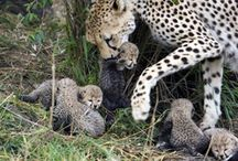 Cute Animals and their families