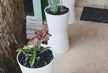 (Kamer) planten