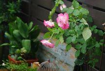 入賞作品 - 入賞作品はハイポネックス社のPOPやWebサイトに掲載!『薔薇』フォトコンテスト / http://greensnap.jp/contest/52