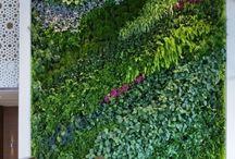 trailling plants / trailling plants