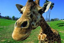 Dans mon parc zoololique / ZOOOOOOOOOOOOOOOOOOO