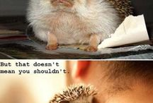 Hedgies / by Meg Beard