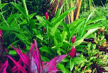 Plantas, jardinagem e paisagismo