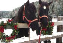 Horsey Christmas / Christmas!