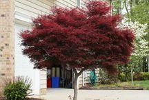 A SMALL TREE