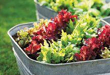 Zero Waste Garden / Apartment, compact, or  small gardening ideas