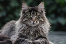 Les chats <3