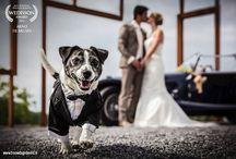 Wedding photography awards / Bruidsfoto awards / Wedding photography awards / Bruidsfoto awards