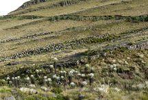 Santuario de Flora y Fauna Guanentà Alto del Rìo Fonce