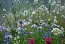 polany kwieciste