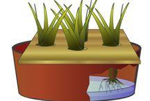 Cultivo hidroponica