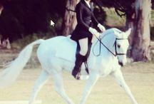 My Horses / Horses