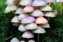 Mycological Imagery / by Miz Shands