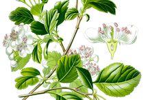 Ilustration Plants & Flowers