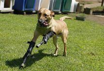 OrthoPets Success Stories / Here are some of our amazing success stories.
