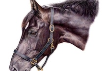 Horses In Art- Without Riding Tack (Partial Body) / Untacked or with halter.