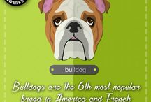 Fun Facts For Dog Breeds / Check out some of these interesting facts about your favorite Dog Breed! Let's find out!