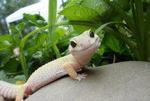gekko ❤️