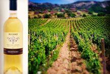 Vini Typici / I Migliori vini d'Italia certificati e registrati nella tradizione dell'eccellenza