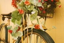 The one with Geraniums