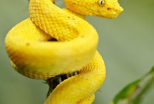 snakes / by wildholz Biber