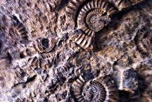 Fossil and Artifact Collecting and Trading a New Career