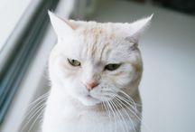 Kitty cat.
