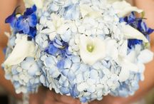 Shades of Blue / by QVC