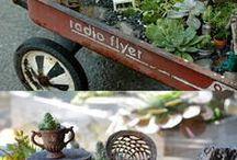 pot tanaman,bonsai,terrarium