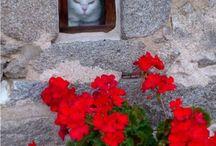 Kapıdan pencereden bakanlar