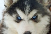 My pup some day