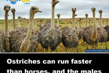 Animal Facts / Visit: www.WowGk.com for more Knowledgeable Facts!