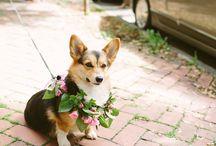 Wedding Dawgs