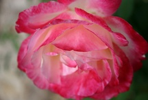 pink love / by Lina Fry