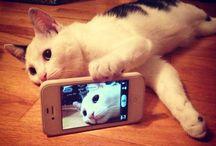 Nos amis les chats / Des chats mignons et drôles qui nous font tous craquer