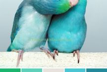 Turquoise Palette