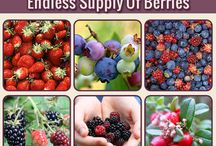 Gardening / Fruits