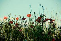 My Secret Garden / by Wendi Van Buren
