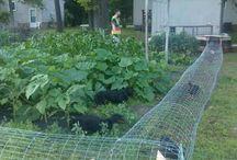 zwierzaki w ogrodzie