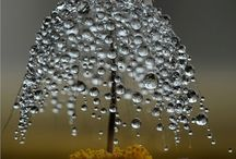 Water ~droplets / by Mary Donnelly