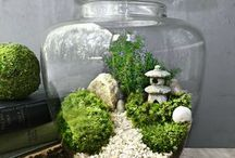 Garden In Glass and Terrarium