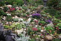 Succulent rockery