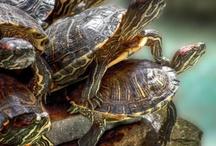 Turtles / by Pia Bertens